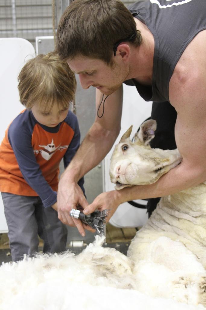 didn't see George shear any sheep!