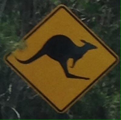 and kangaroos