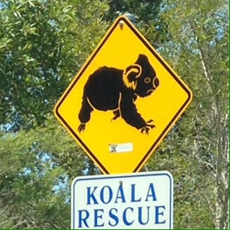make way for koalas